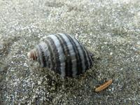 Snail shell on Beach