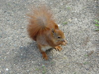 Squirrels 4