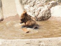 Bear bath 1
