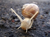 Snails on the run 1