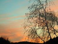 Sunset and tree