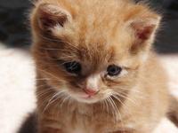 Tiny Shiny Kitty 3