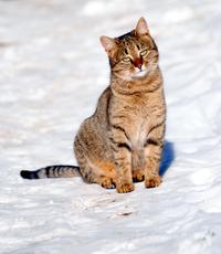 Cat photo 2
