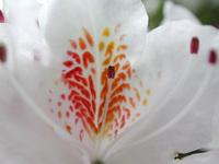 Spring Bloom 3