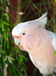 aussie birds 1