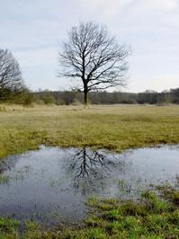 Mirrored Tree
