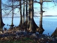 Lake trees 2