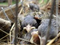 birds/passaros 1