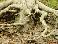Tree Anatomy 2