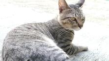 Reclining Cat