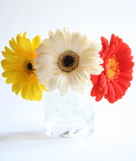 Flower Series:. 1
