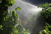 Refreshing the garden