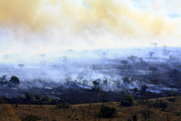 Bush Fire 4
