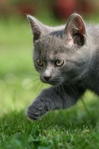 Hunting kitten 1