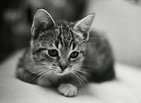 Funny kitten 5