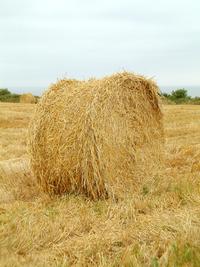 Hey, hay