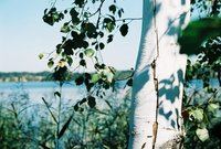 A Tree and A Lake