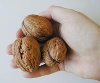 A hand full of walnuts