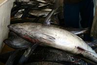 Muscat fish market 3