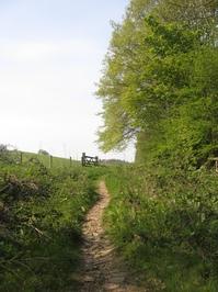 Wooland Paths
