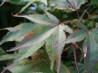 Leaf Textures 5