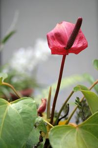 Flower0 1