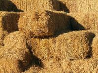 Hay pattern