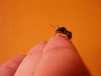 Rain-splattered queen ant 2