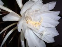 exotic flowers 3
