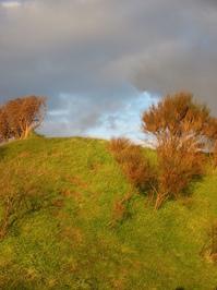 hillock bush at sunset