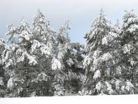 Polish winter 18