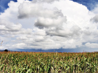 Field in france