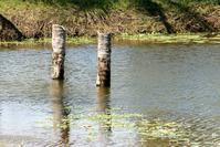 lake in farm