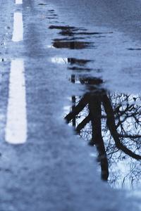 Warning! Tree in Road