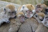 Monkey family 2