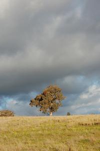 Bush Trees 4