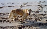 Dog, Hawaii, North Shore, Banzai Pipeline