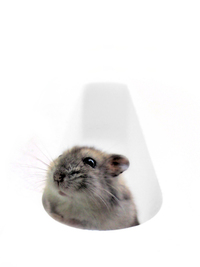 Hem the hamster