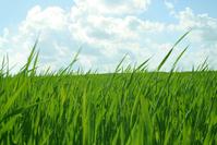 Grean grass