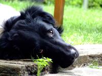My dog (sem)