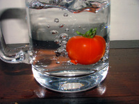 tomato plunge series 4