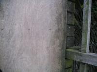 wooden briedge
