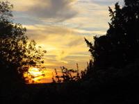 Nightfall through the Trees