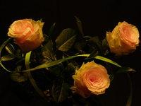Rose in the dark 1