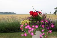 Flowers in Carnousti