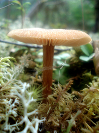 Mushrooms - nature's bounty 2