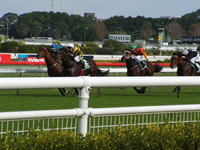 At the races 4