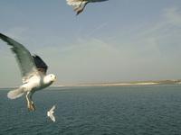 Bird flying 3