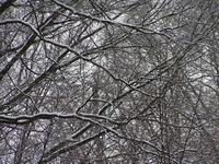 Snowy Woods 2