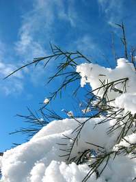 Winter_0 4